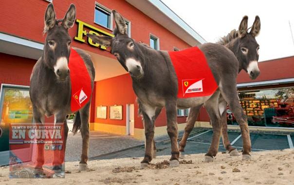 3wild_burros_cute